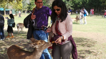 Feeding the deers - Nara